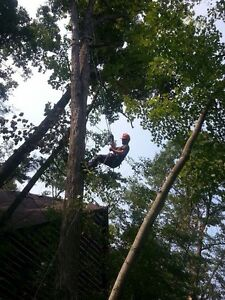 Affordable Tree Trimming and Removal Stratford Kitchener Area image 5