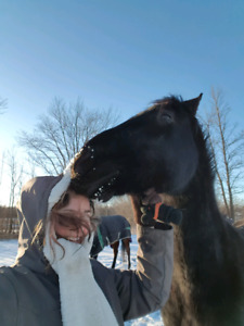 ISO Horse Equine Trainer
