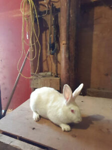 Rabbitry for sale CHEAP