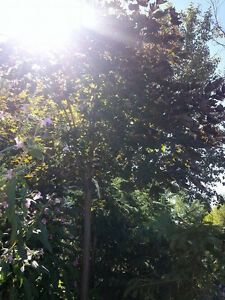 Tree Sales & Plant Sales