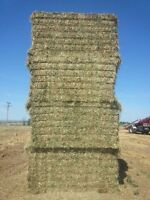 Large square Alfalfa mix hay