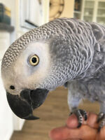 Looking for Parrot Sitter
