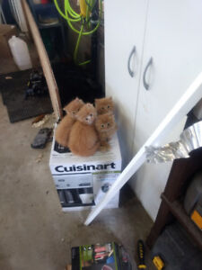 Kittens to place in new home