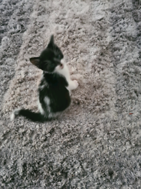 4 beautiful friendly kittens