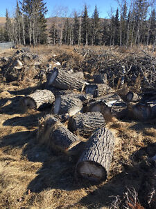 Firwood and tree stumps