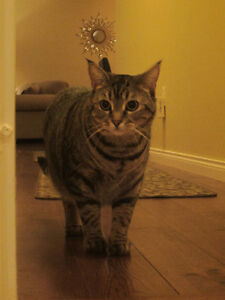 Still Missing! Please help find Puss Puss!