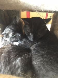 SIRIS & BART ***Two Bonded Brothers***