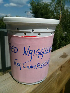 Red Wiggler Worms-Compost Household Garbage- From Earth To Earth Edmonton Edmonton Area image 6