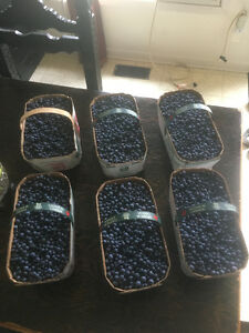 Ontario Fresh Picked Blueberries For Sale