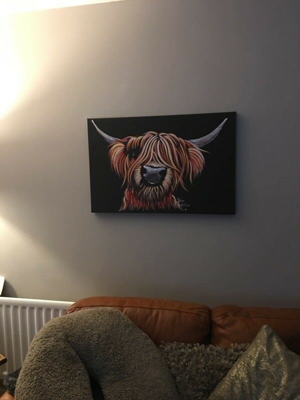 Highland cow boxed canvas
