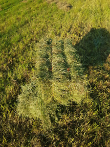 Small square bales (mix of grass, brome and alphalfa)