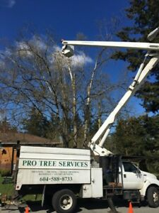 Tree Services - Tree Removal by Experts with Heart and Hustle
