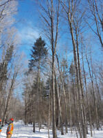 Woodlot Management and Tree Marking