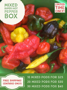 Fresh Super Hot Peppers For Sale | Moruga, Ghost, Primo, 7 Pot
