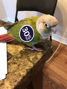 Adorable parrot looking for a new home