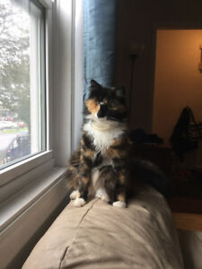 ONE EYED CAT LOST IN NORTHEND