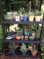 PLANTS -- succulents and more!