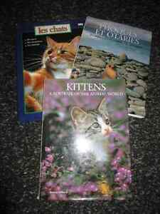 Gros livres Kittens, les chats, Phoques et Otaries Gatineau Ottawa / Gatineau Area image 1