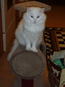 Missing from Lighthouse Road, West Quaco, St Martins