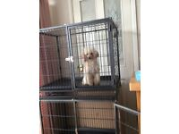 Dog/cat Cages