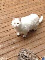 Cute and friendly cat found in Moncton area