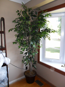 Very Large & Full Artificial Ficus Tree