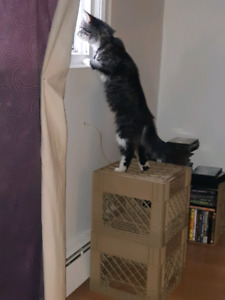 Free 8 month old kitten for rehoming