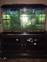 35 gallon fish tank