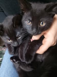 1x Cute Male kittens