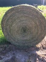 tame grass  hay for sale