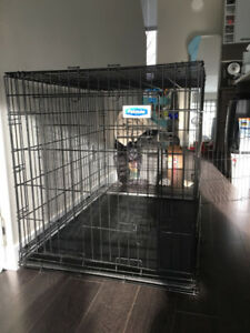 Extra large mental dog crate for sell