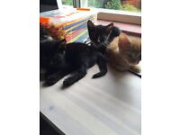 Beautiful Kittens For Sale