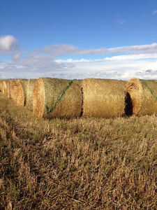 Green feed hay bales