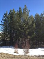 Quesnel Land For Sale