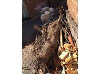 Free fire wood / logs / tree