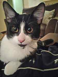 Black&White Cat  looking for his forever home