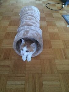 ***CAT TUNNEL FOR SALE!!!***