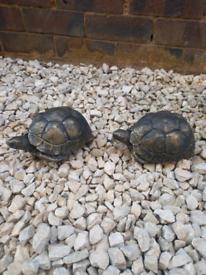 Stone tortoise black/gold orniment