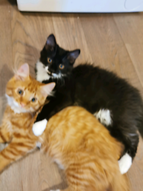 2 beautiful kittens looking for a home