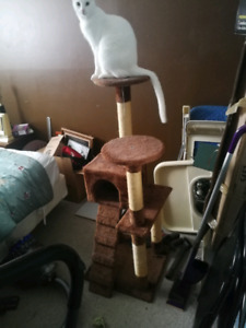 Cat tree (Used)