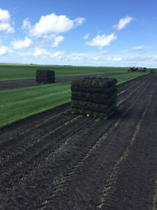 Lach Sod Farms •Your Go To Quality Sod Supplier• (204)-467-9013