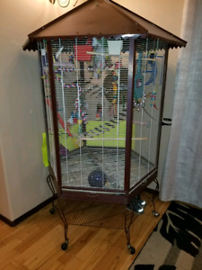Lovebirds and cage