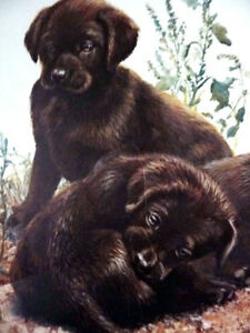 """Hand Signed Lithograph by Amy Brackenbury """"Chocolate Cluster"""" Stratford Kitchener Area image 10"""