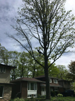 Arborvation Tree Services