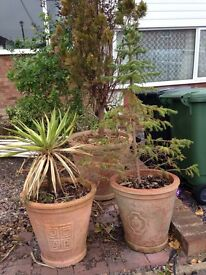 5 Large Plant pots for sale