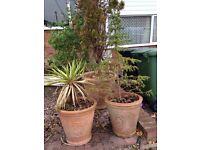 5 Large Plant pots for sale