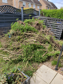 Garden hedge removal wanted