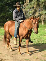 Easy Going Saddle Horse