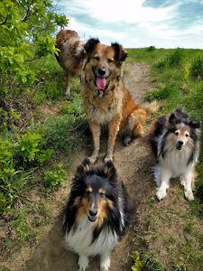 Dog Walking in Saskatoon - The Roving Hound