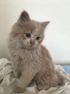 Adorable Female Kittens looking for a home